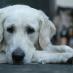 Angst vor Lärm bei Hunden behandeln