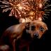Hunde und Angst vor Feuerwerk