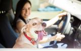 Bachblütenmischung Nr. 105 Reisekrankheit Hunde