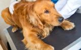 Bachblütenmischung Nr. 106 Stress bei Hunden