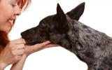 Bachblütenmischung Nr. 107 Ängstlicher Hund